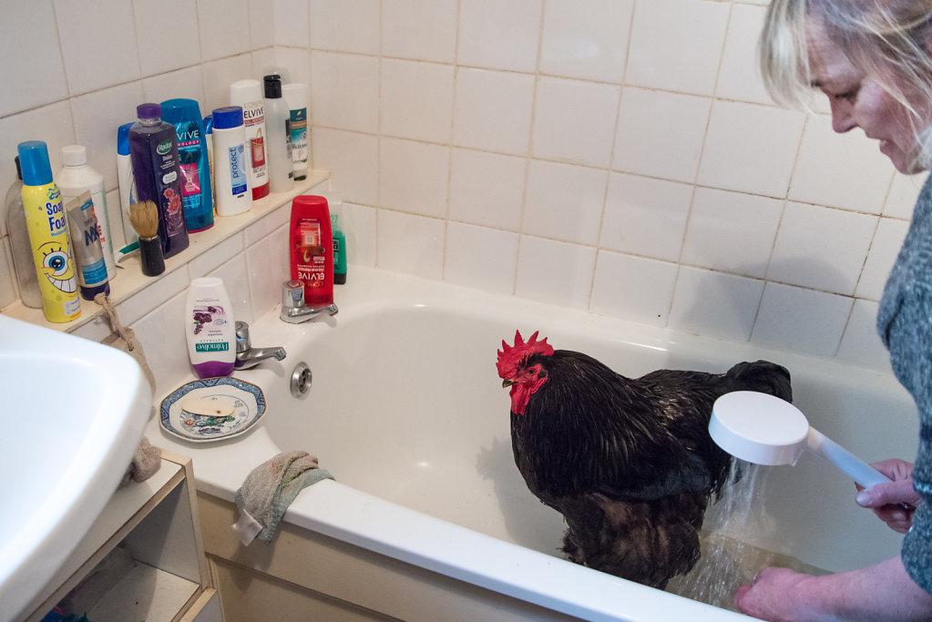 """Am Tag vor einer Farm-Show duscht Dorinda Fontana ihren Champion """"BBC3"""" (Big Black Cock 3) in ihrem Ba- dezimmer. Ihre Familienangehörigen, die kurzfristig aus Frankreich angereist sind, müssen deswegen die öffentliche Toilette im Ort benutzen."""